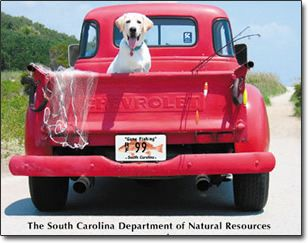old pickup trucks and dogs in the back;  Hey, Labbie, what are you doing on back of that truck?