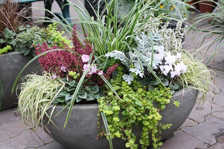 Der Sommer neigt sich dem Ende zu und der Herbst kündigt sich an. Doch auch für Herbst und Winter gibt es eine dekorative Bepflanzung der Gefäße.