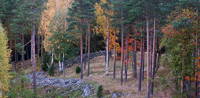 Rapolan linnavuori - Luontoon.fi