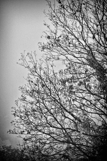 """Saatchi Art Artist Dan Cristian Lavric; Photography, """"Cold Autumn - Limited Edition 1 of 5"""" #art"""