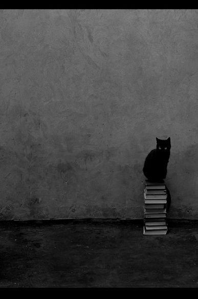 book stack : Black Kitty, Cat Books, Favorite Things, Bookish Cat, Cat Love, Kitty Kitty, Books Lovers, Black Cat, Animal