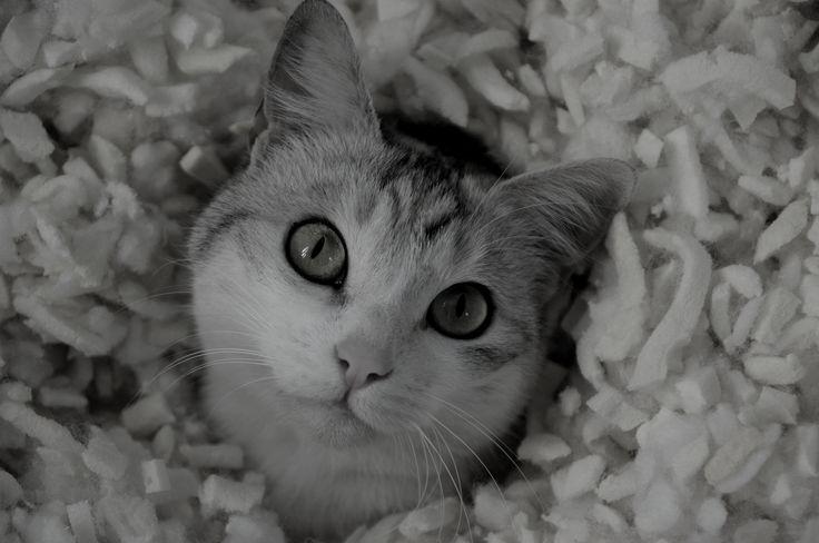 Un gatto è in grado di sostenere lo sguardo di un Re. -Proverbio inglese-