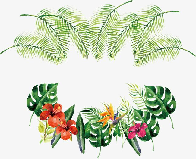 Watercolor Tropical Bottle Border Vector Png Tropical Plants