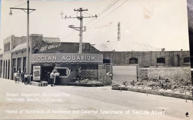 """This photo of the Ocean Aquarium in Hermosa Beach, California has me worried. They felt the need to add a sign that says """"ALL ALIVE!"""" Are we supposed to deduce that other aquariums features animals that are dead? Or fake? Or that they'd recently killed all their marine life but now they're all alive? Either way, I am very suspicious..."""
