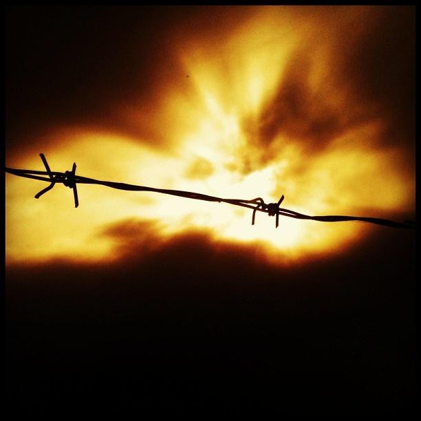 Always the Sun ~ Stranglers