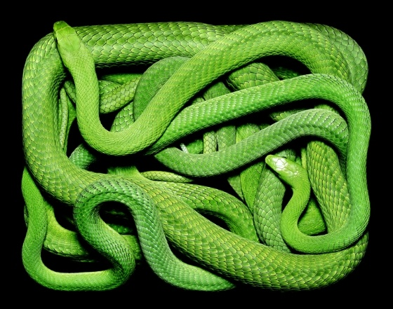 By Guido Mocafico - he put snakes in a box and made pictures of them.