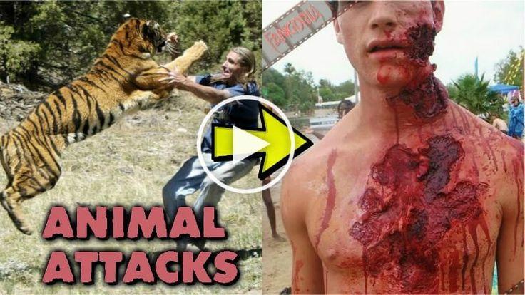 https://s-media-cache-ak0.pinimg.com/736x/f3/26/00/f32600d1bfe775ec89b739fa8db9dad8.jpg Green Anaconda Attacks On Humans