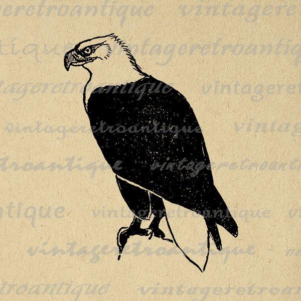 Digital bald eagle image graphic bird illustration printable vintage