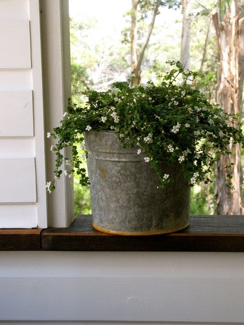 I just love the old tin bucket filled with flowers.  ZsaZsa Bellagio: Home SWEET Home