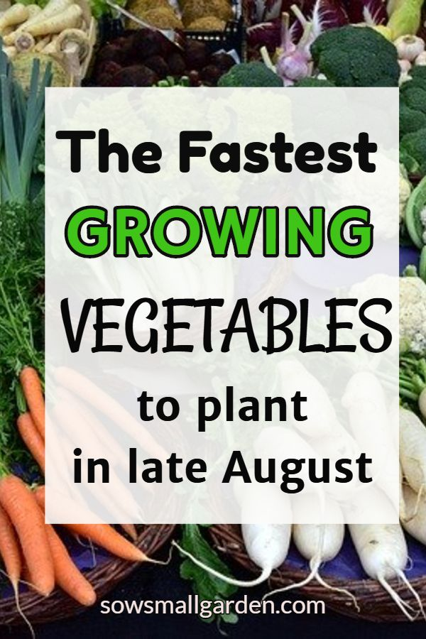 5 Fastest Growing Vegetables To Plant In Spring And Late Summer Sow Small Garden In 2020 Fast Growing Vegetables Growing Vegetables Plants