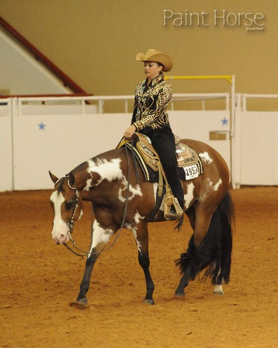 Western Pleasure Paint/Pinto horse