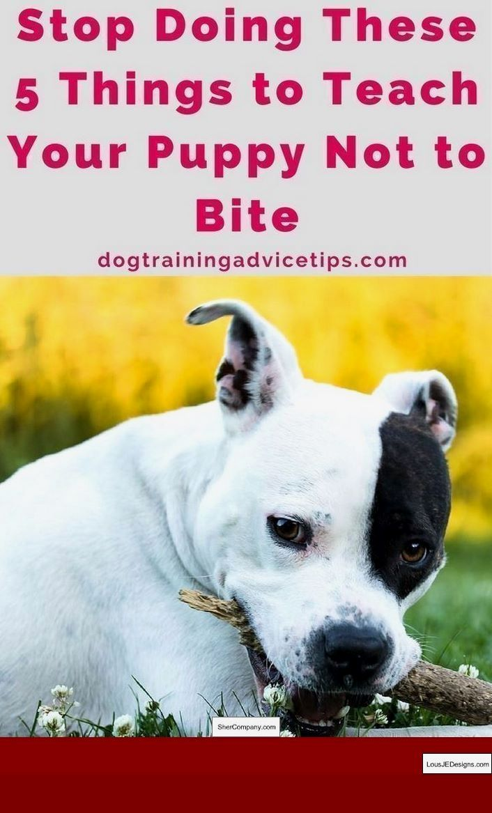 Good Potty Training Tips For Puppies And Pics Of Best Way To Potty