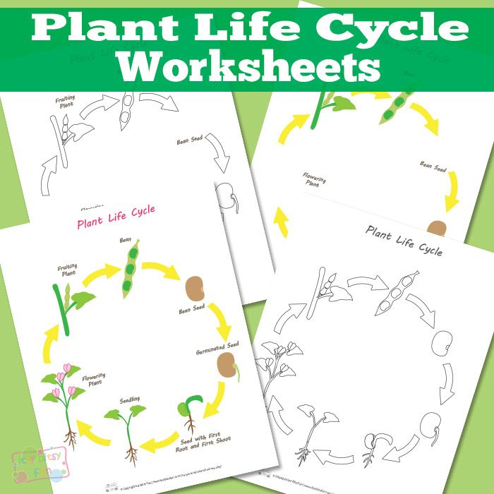 Plant Life Cycle Worksheet Plant Life Cycles Life