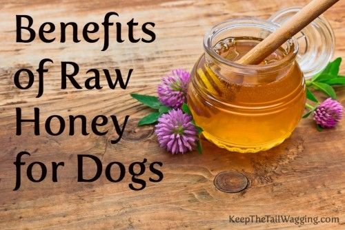 Benefits of Raw Honey for Dogs