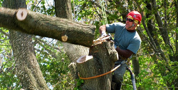 tree trimming services with Home Commercial Services visit us www.cleaning4hcs.com or to call 9728278081