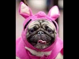Afbeeldingsresultaat voor gekke hond
