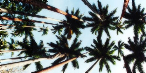 Twitter Header // Palm Trees #3 | Icons | Pinterest ...