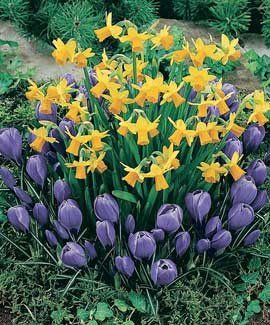 Dig Once, Plant Twice: layering bulbs for staggered blooms.  Includes bulb combos that work with this method.