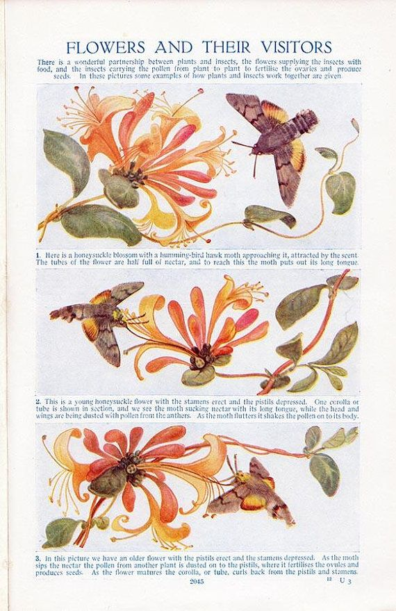 natural healing encyclopedia stengler pdf download