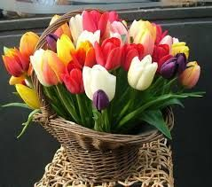 """Képtalálat a következőre: """"tulipán képek"""""""