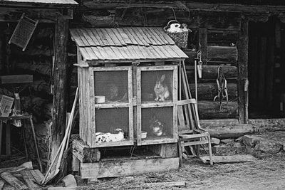 bwstock.photography - photo | free download black and white photos  //  #Rabbit #Hutch