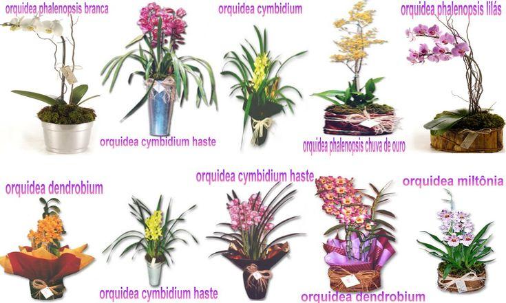 Tipos de Orquideas: http://www.orquideasx.com.br