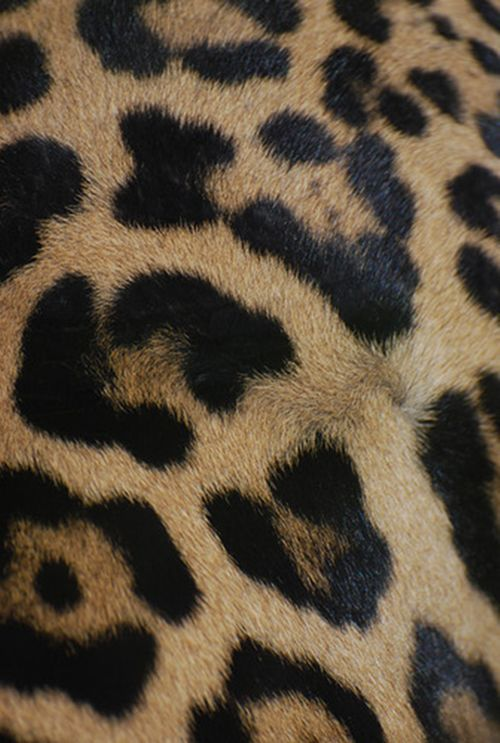 The perfect leopard print