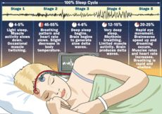 The Prefrontal Cortex During Sleep   Psychology Today
