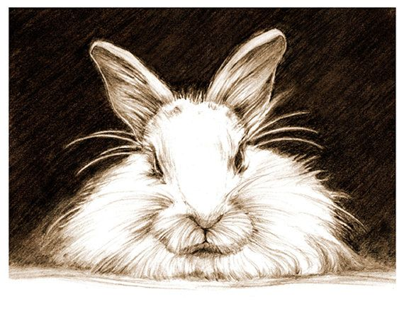 Art, Pencil Sketch, Rabbit Art, Rabbit Sketch, Bunny Pencil Sketch, Animal Drawing
