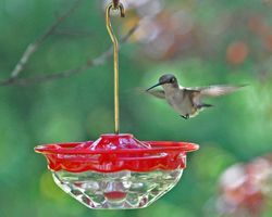 New Wild Birds Unlimited Mini High Perch Hummingbird Feeder.  How cute!