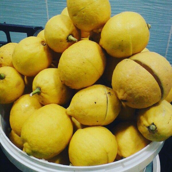 Cretan lemons