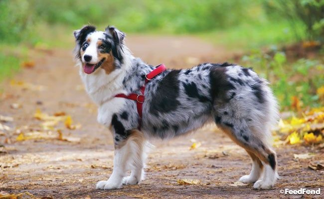 Best Dog Harness To Stop Pulling The Right No Pull Harness In