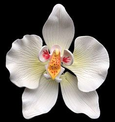 """Moth Orchid. Gumpaste. 4"""" - Item #390735. Certified Kosher. Contains Wire."""