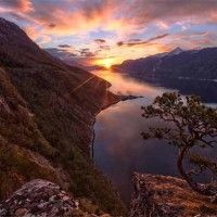 Interesting Photo of the Day: Lone Pine Tree on Cliff in Norway