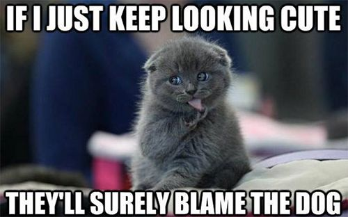 Just keep looking cute and 20 more funny cat captions