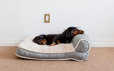 clever dog bed