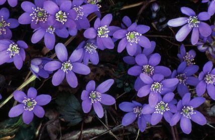 Ground Cover Plants for Florida