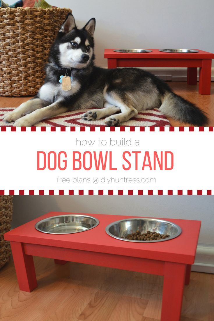 Best 25 Raised Dog Bowls Ideas On Pinterest Raised Dog