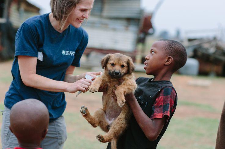 Puppy Grace werd overgoten met kokend water toen ze over straat zwierf. Nu vecht ze voor haar leven in onze CLAW-kliniek in Zuid-Afrika. Een kliniek waar nog veel meer honden en katten zorg nodig hebben. Het IFAW is de enige organisatie die gratis diergeneeskundige zorg biedt aan 37 arme gemeenschappen. Mensen lopen kilometers naar onze kliniek om hun dier te laten behandelen. Nu hebben we middelen tegen vlooien en teken nodig, en is er dringend behoefte aan hokken en melk voor de kittens.