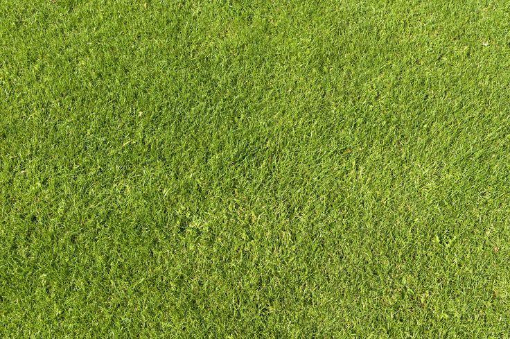 Green Grass Texture 01 by goodtextures