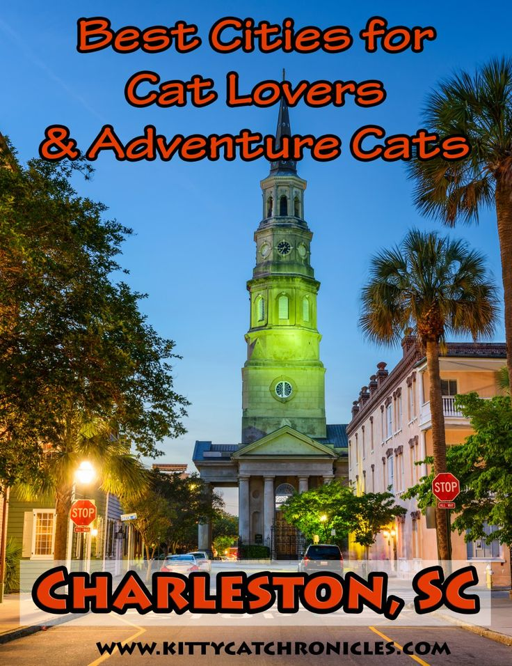 The Best Cities for Cat Lovers & Adventure Cats: Charleston, SC