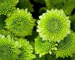 green flowers - Google Search