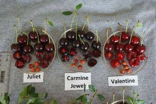 36 Best Harvested Woody Ornamentals Images On Pinterest
