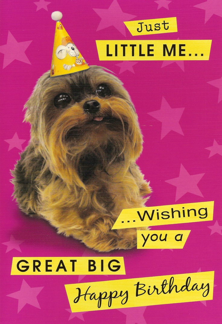 yorkie happy birthday 17 best images about yorkie cards on pinterest blank 8793
