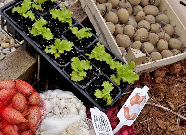 522 best jardin potager images on pinterest garden deco vegetable garden and coins. Black Bedroom Furniture Sets. Home Design Ideas