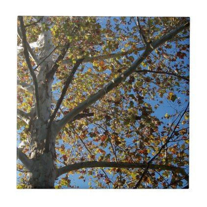 Sycamore tree in the fall against a blue sky tile - fall decor diy customize special cyo