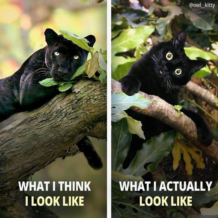 Erwartung gegen Wirklichkeit. Ich bin ein Trottel! 🥰 – Pantherphoto 📸 Shaaz Jung – #ow …   – Katzen