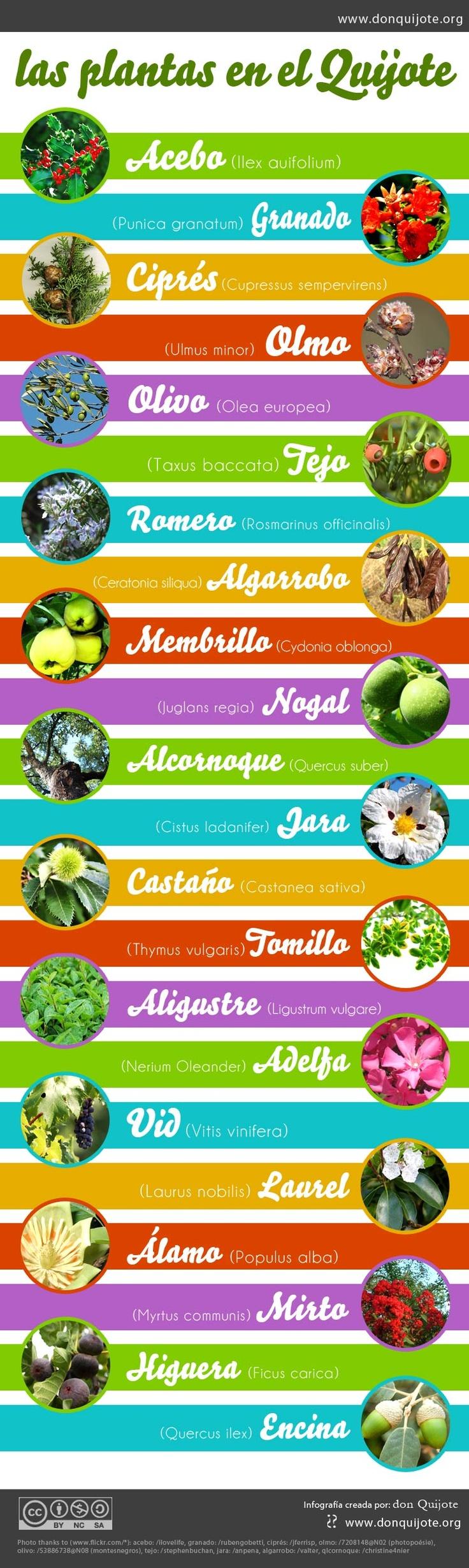 Una lista con los nombres de las plantas y su nombre en latín.