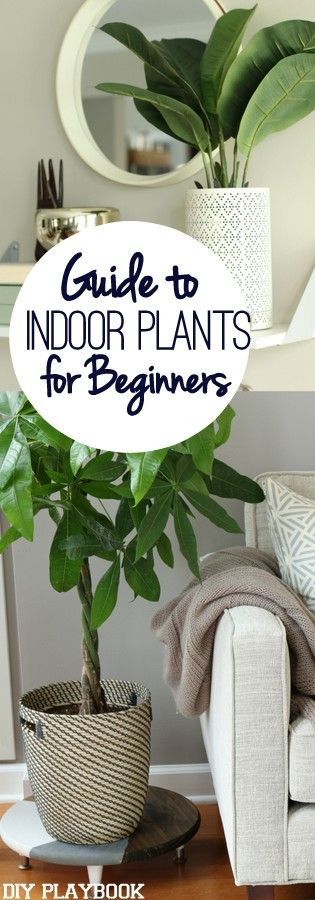 Indoor Plant Survival Guide