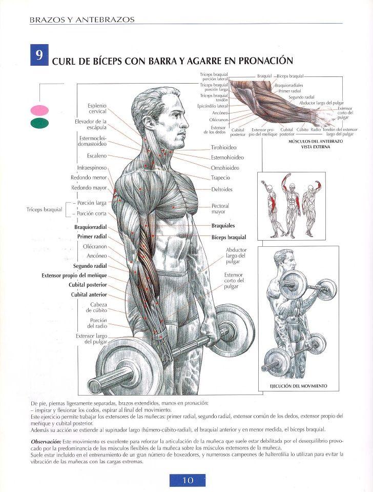 Guia De Los Movimientos De Musculacion Frederic Delavier Musculacion Ejercicios Musculacion Ejercicios Para Brazos